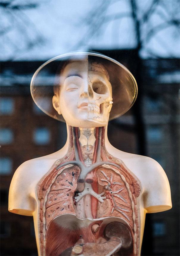 Industry-Specialist Life Sciences Translators